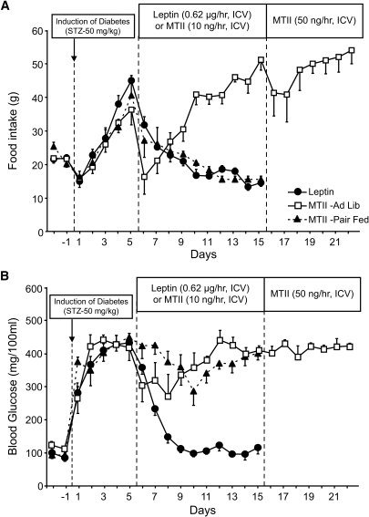 Food intake (A) and blood glucose (B) responses to chronic intracerebroventricular infusion of leptin (●, n = 5) or the MC3/4R agonist MTII in ad libitum–fed (□, n = 5) and pair-fed (▲, n = 5) STZ-diabetic rats. Data are means ± SE.