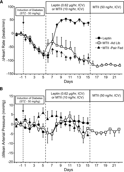 Heart rate (A) and MAP (B) responses to chronic intracerebroventricular infusion of leptin (●, n = 5) or the MC3/4R agonist MTII in ad libitum–fed (□, n = 5) and pair-fed (▲, n = 5) STZ-diabetic rats. Baseline heart rate and MAP values for leptin, MTII ad libitum–fed, and MTII pair-fed groups were 378 ± 5 bpm and 100 ± 3 mmHg, 366 ± 11 bpm and 90 ± 1 mmHg, and 398 ± 8 bpm and 101 ± 4 mmHg, respectively. Data are means ± SE.