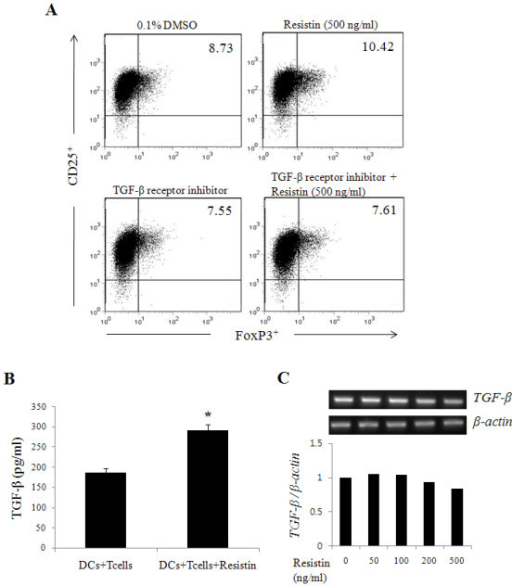 TGF-β secreted by CD4+ CD25+ FoxP3+ Tregs, but not by DCs, induces the expansion of Tregs. CD4+ T cells were pre-treated with inhibitor for TGF-β receptor for 1 hr and co-cultured with DCs, followed by resistin treatment for 4 days. Anti-human CD2 and CD3 antibodies were then added to the cells for an additional 3 days. (A) CD25+ FoxP3+ Tregs were measured by flow cytometry. (B) TGF-β production in the supernatant was measured by ELISA. (C) DCs were treated with various concentrations (0, 50, 100, 200 and 500 ng/ml) of resistin for 6 hrs and then TGF-β mRNA expression was measured by RT-PCR. * P< 0.05. The value in each panel indicates the percentage of CD25+ FoxP3+ Tregs. The results represent the mean ± standard deviation from three separate experiments.