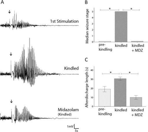 EEG discharges and motor seizures induced by hippocampal kindling. A, afterdischarges recorded from a mouse after the first stimulation (top) and fully kindled following an intra-peritoneal injection of saline (middle) or midazolam (MDZ; 2 mg/kg, bottom). The afterdischarges were evoked by unilateral CA3 stimulation (60 Hz for 2 seconds, indicated arrows) and recorded from the contralateral CA3 area. B, seizure stages assessed from 6 animals. *, p = 0.008 or p = 0.014; Wilcoxon signed rank test. C, afterdischarges measured from same 6 animals. *, p = 0.014; paired t tests.