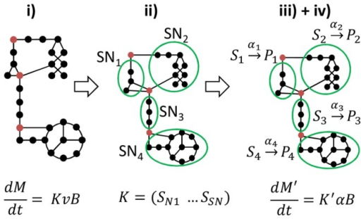Modeling approach decomposed into 4 steps.The complete network (step i) is decomposed into sub-networks (SN) assumed at quasi-steady state (step ii). These are reduced to a set of macroscopic reactions () (step iii), for which kinetics are defined (step iv). Linking metabolites interconnecting the SN are allowed to accumulate (red circles) or be reused, which gives the dynamics of the whole network. From step iv), an ordinary differential equation (ODE) system is obtained, representing evolution of the macroscopic scale of the bioprocess as well as intracellular processes and accumulation of metabolites. In the full model described in step i), ,, while for the resulting model provided by our approach,  and , such that  and .