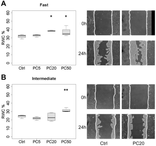 "Small effect of PDGF-CC on wound closure by fibroblasts in vitro.Boxplots represent the RWC in scratch wound assays at 24 h (*p<0.05, **p<0.01) of ""fast"" (A) and ""intermediate"" (B) CLP strains in 0.3% FCS/DMEM in the absence (control; Ctrl) or the presence of PDGF-CC diluted at either 5 ng/ml (PC5), 20 ng/ml (PC20) or 50 ng/ml (PC50). Micrographs show representative examples at 0 and 24 h in the absence (Ctrl) or presence of PDGF-CC (P20; P50). Area of scale bar corresponds to 10% RWC or 0.32mm2."
