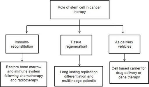 Role of stem cells in cancer therapy