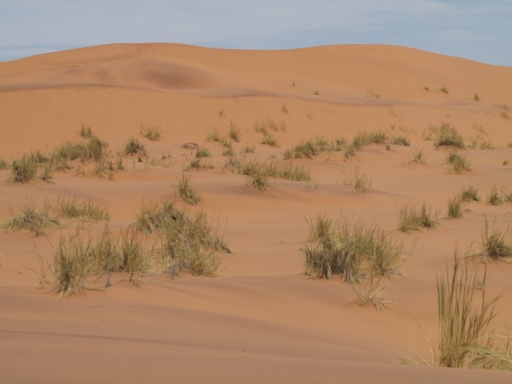 "large, mostly bare sand dunes and partly vegetated interdune valleys at Gobabeb (23°34'17"" S 015°02'52"" E)"