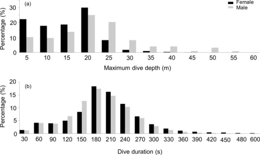 Frequency distribution of the maximum depth and dive duration of U-dives.Frequency distribution of (A) the maximum depth (B) and dive duration of U-dives performed by female (black bars) and male. (grey bars) harbour seals