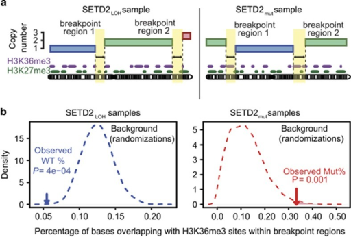 SETD2 mutation exposes H3K36me3 sites to chromosome breakage. (a) Schematic illustrating the mapping of chromosomal breakpoint regions to sites of H3K36me3/H3K27me3 (data from the ENCODE consortium) in both SETD2LOH and SETD2mut. Breakpoint regions, identified from SNP 6.0 array data, are the regions between two segments of a chromosome present at different allele-specific copy numbers. (b) Representative plots of observed H3K36me3 frequencies against expected frequencies in SETD2LOH and SETD2mut tumours, using a minimum segment length of 10 Mb and a maximum breakpoint region length of 20 kb.