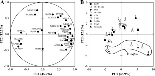 Principal component analysis of physiological and transcript abundance data. Plots for variable contribution to each principal component (a) and projection of individual observations (b) on PC1 and PC2. For A, mean of expression of each gene is presented in leaves (L) and root tips (R) and mean of abscisic acid (ABA), phaseic acid (PA) and dihydroxyphaseic acid (DPA) is presented in shoot (S) and root (R) xylem sap. For B, key to symbols as shown in Fig. 1c, numbers indicate the number of days of withheld irrigation