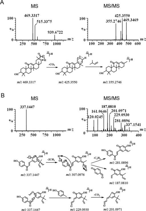 Structural elucidation of GC7 (A) and GC13 (B) by MS and MSMS analysis.The proposed fragmentation pathway is shown below mass spectra.