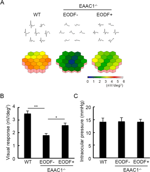 Effects of EODF on visual responses and IOP in EAAC1−/− mice.(A) Averaged visual responses of the 2 K component demonstrated using three-dimensional plots. (B) Quantitative analysis of the visual response amplitude in (A). (C) Effects of EODF on IOP in EAAC1−/− mice at 12 W. The data are presented as means ± SEM of six samples for each experiment. **P < 0.01, *P < 0.05.