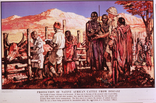 <p>Multicolor poster with black lettering.  Visual image is a reproduction of a painting featuring several men in red robes such as those often associated with the Masai people of eastern Africa, and three men in khaki uniforms.  Several head of cattle are visible and one is being given a shot by one of the uniformed men.  Title and caption below painting.  Distributor information in lower left corner; printer information in lower right corner.</p>