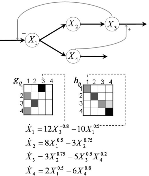 Topology mapping. Example of network topology mapping onto kinetic orders in an S-system [17]. The exponents in the equations directly correspond to effects of metabolites on processes (flux arrows) in the pathway diagram. As an example, the flux out of X3 is affected by X3 as substrate and by X4 as activator. Both variables appear in the corresponding term with their respective kinetic orders. The gray-scale in the g and h matrices reflects the magnitudes of the exponents in the production and degradation terms of the S-system, respectively, with higher values shown in darker hues.