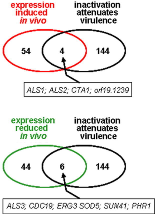 Comparison of the in vivo transcriptome (i.e. the subset of C. albicans SC5314 genes that were regulated during renal infections) with the in vivo phenome (i.e. the subset of C. albicans genes that affect the virulence of C. albicans, as defined by the Candida Genome Database @ August 2007) (Supplementary data).