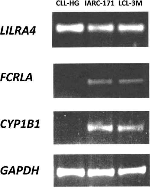 Figure 5. Gene expression difference observed by RT-PCR. Comparison between gene expression of LILRA4, FCRLA and CYP1B1 using RT-PCR in the CLL-HG cell line and 2 LCL lines IARC-171 and LCL-3M derived from normal B cells.