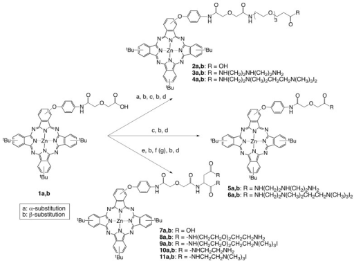 (Scheme 1) Synthesis of dicationic ZnPcs 4, 6, 9 and 11. Reaction conditions: (a) tert-butyl-12-amino-4,7,10-trioxadodecanoate, TEA, HOBt, EDCI, DMF (77-82%); (b) TFA, CH2Cl2. 0 oC, 3 h (82-92%); (c) 1,4-bis(N-Boc)-triazaheptane, TEA, HOBt, EDCI, DMF (77-89%); (d) CH3I, DIPA, DMF (59-68%); (e) L-aspartic acid di(tert-butyl) ester, TEA, HATU, DMF (87-89%); (f) N-Boc-2,2′-(ethylenedioxy)diethylamine, TEA, HOBt, EDCI, DMF (51-52%); (g) N-Boc-ethylenediamine, TEA, HOBt, EDCI, DMF (58-62%).