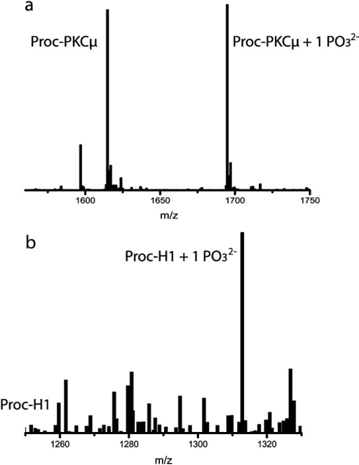Mass spectra for (a) Proc-PKCμ and (b) Proc-H1 after removal of the leader peptide. Calculated and observed m/z values are shown in Table S1, ESI.†
