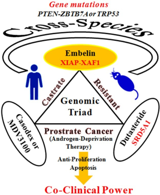 A genomic triad with a co-clinical strategy targets for castrate-resistant prostate cancer.