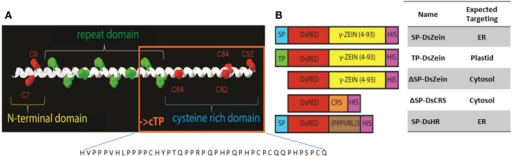 (A) The N-terminal sequence of mature 27 kDa γ-zein, which has been shown to trigger PB formation. The sequence comprises two N-terminal cysteine residues (red) followed by an amphipathic repeat region and another four cysteine residues. The sequence present in construct ΔSP-DsCRS is boxed in orange. (B) Schematic overview of the expression constructs. SP, signal peptide for entry into the ER; TP, plastid-targeting peptide; DsZein, fluorescent marker protein plus γ-zein(4–93); CRS, cysteine-rich sequence (residues 51–93); HR, hydrophobic repeat sequence (PPPVRL)3; HIS, polyhistidine tag.