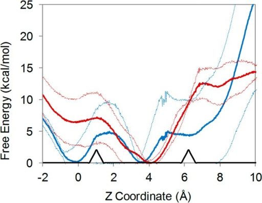 Free energy landscapes of amantadine in WT (blue) and S31N (red)M2 channels. The free energy minimum of each channel was set to 0kcal/mol. One standard deviation between runs is shown in dotted linesof the corresponding color above and below each trace. Gly34 and Ser/Asn31mean α-carbon positions (black arrowheads) are shown for referencefrom left to right, respectively.
