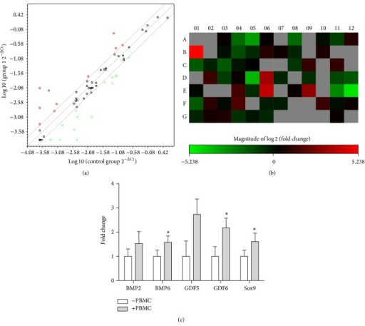 Change in mRNA levels after 24 h PBMC stimulation with a cut-off value of 4. (a) A scatter plot showing up- and downregulated genes and core genes with no change (n = 1). (b) A heat map visualization of 2log2-fold change of the 84 genes in the stem cell PCR array (red: upregulated and green: downregulated). Grey shows the genes that were undetermined (no Ct value with a cut-off value of 35). (c) Real-time PCR validation of 5 key chondrogenic genes (n = 4) normalized to B2M housekeeping gene mRNA levels.
