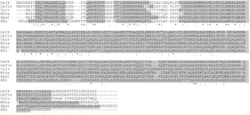 Secondary structure of Orf8, Orf16, and other KfrA proteins. Tniv, Mfr, Pput, and RK2 represent the KfrA proteins of Thiothrix nivea, Methylophaga frappieri, pMCBF1 of Pseudomonas putida, and RK2 plasmid. The gray regions indicate alpha helix structures predicted by PSIPRED v3.3.