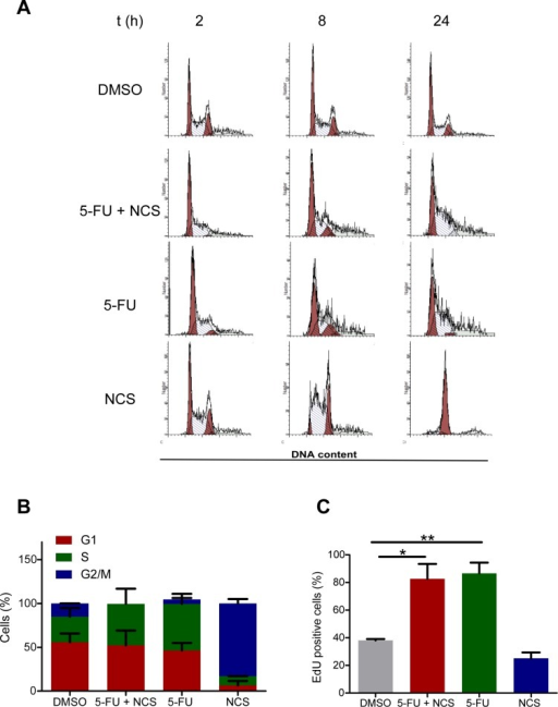 Reduced HRR is not a consequence of a shift in cell cycle distribution(A) Propidium iodide staining and flow cytometry of SW480 cells treated with DMSO, 5 μM 5-FU and/or 100 ng/ml NCS as detailed in Figure 1A. (B) Quantification of the cell cycle distribution. (C) EdU assay in SW480 cells to determine the percentage of cells in S phase. The cells were first treated as shown in Figure 1A; 2 h prior to fixation, 15 μM EdU was added to the cells. The cells were then fixed on the plate, and EdU was detected by Alexa 488 azide. Fluorescence intensity was quantified as described for γ-H2AX in Figure 1C.