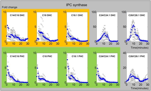 Trends in IPC synthase activities.The upper and lower panels show IPC synthase activities from DHC to IPC and from PHC to IPC, respectively. The X-axis represents the 30 minutes of the heat stress experiment, and the Y-axis represents the fold change in activities. In each plot, the blue and gray dots represent averaged and individual enzyme activities, respectively. The yellow and green shading marks similar enzyme activity patterns involved in DHC (top panel) and PHC (bottom panel), respectively.