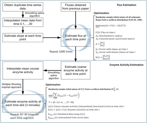 Details of the procedures of flux estimation and enzyme activity estimation.