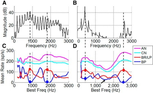 Model IC responses to vowel tokens. A, B, The spectra of actual vowels are as follows: /æ/ (A), /i/ (B). C, D, Rate profile of model cells with BP MTFs tuned to F0 (blue) has dips at formants (dots). Rate profile of LPBR model cells with minima in the MTF near F0 (red) has peaks near formants (dots). AN (magenta) and CN/brainstem (cyan) rate profiles. D, Rate profile for BP cells has an ambiguous dip (arrow) for vowels with a broad spectral valley. LPBR cells (red) have relatively low rates where spectral energy is low, due to reduced excitatory inputs. Vowel levels were 65 dB SPL. Model parameters are the same as in Fig. 3B.