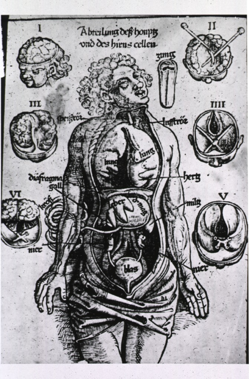 <p>Human figure with abdominal and thoracic cavities exposed and organs displayed; in the margins are several views, from above, of the brain and cranial cavity.</p>