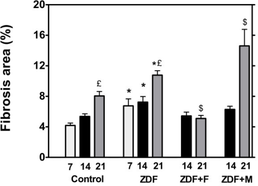Histological quantification of fibrosis (expressed as per cent of total areas) in control and ZDF rats. ZDF rats were untreated (ZDF) or received fenofibrate (ZDF+F) or metformin (ZDF+M) after the first metabolic investigation at the age of 7 weeks. These parameters were measured only in rats sacrificed for tissue sampling (n = 5 for each group), therefore they were measured at 7 weeks only in a group of control and ZDF rats. * p < 0.05 vs the corresponding control group; € p < 0.05 vs the 7 week value of the group; $ p < 0.05 vs the corresponding untreated ZDF group.