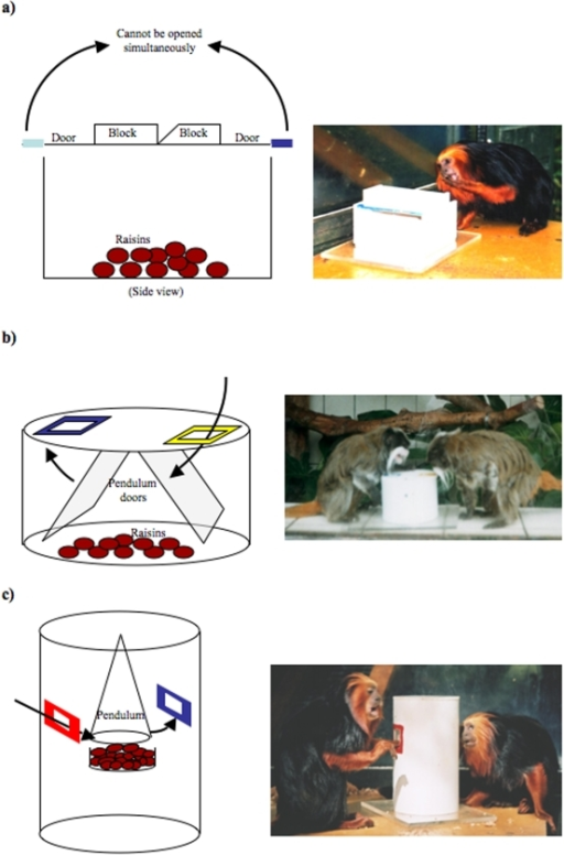 Diagrams and photos of (a) the flip-top task used by a golden headed lion tamarin, (b) the round-box task used by emperor tamarins, and (c) the cylinder task used by golden headed lion tamarins.Arrows indicate the movement of the devices that prevent simultaneous use of the task options.