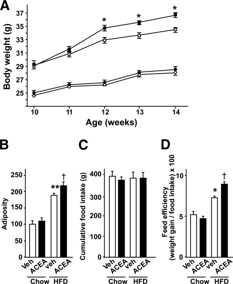 CB1 receptor stimulation increases body weight in obese mice. A: Body weight of ACEA- or vehicle-treated mice on a HFD compared with vehicle-treated mice on a chow regular diet (n = 10 animals per group; *P < 0.05 vs. vehicle-treated mice on a HFD). ○, chow plus vehicle; ●, chow plus ACEA; □, HFD plus vehicle; ■, HFD plus ACEA. B–D: Adiposity (expressed as percentage of weight of visceral and subcutaneous fat when value of vehicle (Veh)-treated mice on chow regular diet is 100), cumulative food intake, and feed efficiency (n = 8 animals per group; *P < 0.05 **P < 0.01 vs. vehicle-treated mice on a chow regular diet and †P < 0.05 vs. vehicle-treated mice on a HFD).