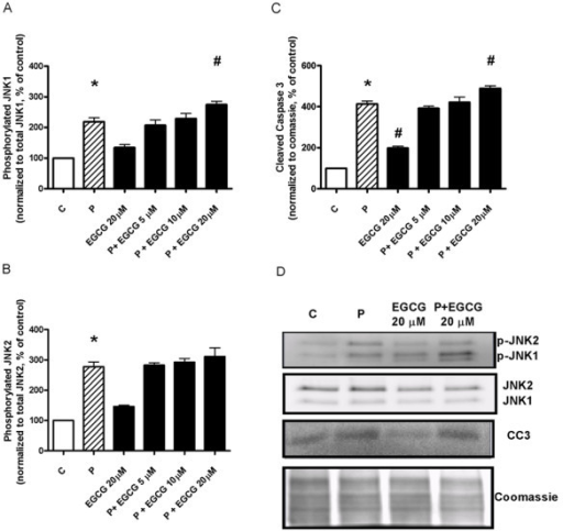 EGCG treatment of isolated islets of Langerhans ex vivo fails to prevent palmitate-induced phosphorylation of JNK and formation of cleaved caspase 3. Pancreatic islets were isolated from lean C57Bl/6J mice and exposed ex vivo for 24 hours in the absence or presence of 0.5 mM palmitate with or without 5, 10 or 20 μM EGCG. Western blot analyses for phosphorylation of JNK1 (A), JNK2 (B) and formation of the apoptosis marker cleaved caspase 3 (C). Bars represent mean ± SEM for 5 different islet preparations in each group. * denotes P < 0.05 for a palmitate effect, and # denotes P < 0.05 for an EGCG effect using one-way ANOVA in conjunction with Dunnett's multiple comparison test. Representative blots for phosphorylated JNK1 (p-JNK1), phosphorylated JNK2 (p-JNK2) and cleaved caspase 3 (CC3) are shown in D.