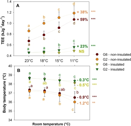 Relationship between total energy expenditure (TEE) and body temperature of insulated and non-insulated pups, huddling in groups of 6 (G6) or placed in groups of 2 (G2), during the cold challenge.Different letters indicate significant differences. ***: significant differences with p<0.0001 between 23°C and 11°C; **: significant differences with p<0.002 between 23°C and 11°C. NS: not significant.