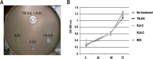 (A) Antimicrobial activity of the single peptides (RJI-C 9 μg/ml; RJII-C 15 μg/ml; TB-KK 6 μg/ml) and of MIX (RJI-C at 9 μg/ml and TB-KK at 6 μg/ml) are shown as inhibition zone assay. A larger zone of inhibition is evident around the MIX compared to the single components. (B) J774 cell line treated with the single peptides (RJI-C 9 μg/ml; RJII-C 15 μg/ml; TB-KK 6 μg/ml) or the MIX (RJI-C at 9 μg/ml and TB-KK at 6 μg/ml) maintain the same growth rate compare to the untreated control.