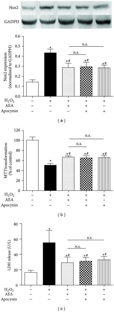 Nox inhibitor did not induce a more significant reduction of Nox2 expression than AEA alone. The cells were divided into five groups, Control: cells cultured in drug-free medium; H2O2: cells exposed to 200 μM H2O2 for 3 h; AEA + H2O2: cells exposed to 10 μM AEA plus 200 μM H2O2 for 3 h; Apocynin + AEA + H2O2: cells exposed to 10 μM AEA plus 50 μM Nox inhibitor AM251 in the presence of 200 μM H2O2 for 3 h; Apocynin + AEA + H2O2: cells exposed to 50 μM apocynin plus 10 μM AEA in the presence of 200 μM H2O2 for 3 h. Nox2 protein expression (a) was evaluated by western blotting (n = 4). (b) Cell metabolic activity and (c) LDH release were determined by MTT (n = 8) and reagent kit (n = 6), respectively. Results are expressed as means ± S.D. *P < 0.05 versus the control (no H2O2, no AEA, and no apocynin), #P < 0.05 versus the cells exposed to H2O2 alone, n.s.: no significance.