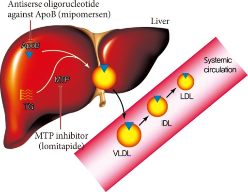 Therapeutic mechanism of lomitapide and mipomersen. The