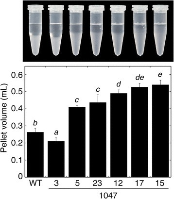 Effects of altered SBEII expression on the gelatinisation of tuber starch granules in 4 M urea. Data are mean pellet volumes ± SD (n = 3 biological replicates). Means not sharing a common letter are significantly different between groups at P = 0.05 as determined by LSD after a one-way ANOVA test. A photograph of one of the replicates is shown above the histogram.