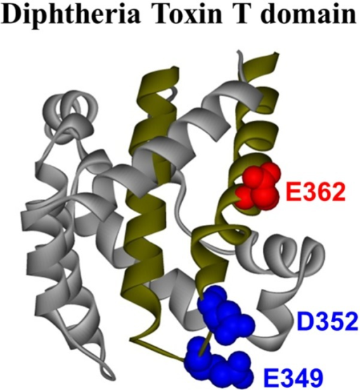 Crystal structure of the diphtheria toxin translocation domain (T domain) in solution at neutral pH [10], highlighting hydrophobic helices TH8 and TH9 as dark yellow ribbons. Acidic residues mutated in this study are shown as CPK representations in blue and red.