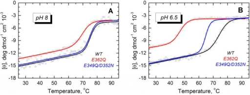 Thermal unfolding measurements of the WT T domain (black) and the mutants E362Q (red) and E349Q/D352N (blue) show that the single mutation causes loss of thermal stability in solution at pH 8.0 (A) and 6.5 (B). The double mutation affects the stability of the T domain only at the more acidic pH. Measurements were reproduced at least three times for each mutant at each pH.