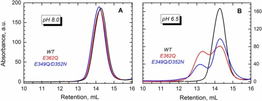 Size exclusion chromatography shows that the WT T domain (black) and the mutants E362Q (red) and E349Q/D352N (blue) elute as a single peak in buffer at pH 8.0 (A), which corresponds to the retention volume of the monomeric form of the protein. At pH 6.5 (B), both mutants showed an additional peak of earlier elution (~13 mL) that suggests the presence of dimers.