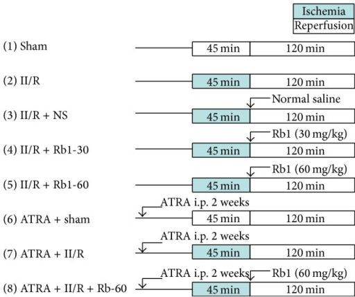 Experimental protocols. Mice were subjected to 45 min of SMA occlusion followed by 2 h of reperfusion. II/R: intestinal ischemia/reperfusion, NS: normal saline, Rb1: ginsenoside Rb1, and ATRA: all-transretinoic acid.