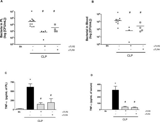 Therapeutic treatment with anti-TLR2 and anti-TLR4 improve sepsis.Mice were treated with individual anti-TLR2 or anti-TLR4 antibodies 3 hours after the CLP procedure. Treatment with both antibodies in combination decreased the number of bacteria in the peritoneum (A) and serum (B) as well as the levels of TNF-α in the peritoneum (C) and serum (D) 6 hours after sepsis compared to the negative control isotype IgG antibody treatment (CLP). * p<0.05 between CLP and Sham groups. # p<0.05 between the antibody treatment and negative control isotype IgG treated-group. Horizontal bars in Fig 5A/5B represent median value. Antibody dose (1 mg/animal). Used 6 animals/group, except isotype IgG antibody treated group (n = 10). Missing points in Figs reflect number of bacteria below detection limit.