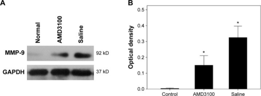 MMP-9 expression in AMD3100-treated mice.Notes: (A) Western blotting bands. (B) Quantified results (in optical density) showing MMP-9 protein levels in control, AMD3100-, and saline-treated animals. *P<0.05 compared to the normal ones.