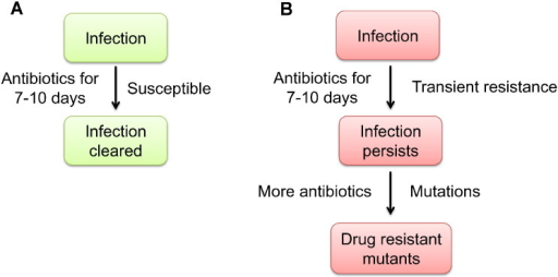 TIVAR overview. (A) The standard 7–10 day antibiotic treatment regimen is sufficient to clear most bacterial infections. (B) Antibiotic treatment of persistent infections may be ineffective at controlling bacterial proliferation as certain host microenvironments may stimulate changes in the bacterium that result in the induction of transient resistance to high doses of antibiotics. This creates a major bacterial population that is transiently resistant to certain antibiotics, from which drug-resistant mutants may arise via established mutational mechanisms.