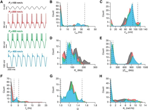 The strength of afferent theta inputs critically regulated changes in intrinsic response properties during cell-autonomous self-regulation of calcium homeostasis. A, The steady state voltage response after theta-dependent evolution, for four different amplitudes of the 8 Hz input sinusoid (peak-to-peak value of sinusoidal permeability: black, 100 nm/s; red, 200 nm/s; green, 300 nm/s; blue, 400 nm/s). Note that at high values of sinusoidal amplitudes (e.g., 400 nm/s) the deflections are large along the hyperpolarized direction because of the large driving force for AMPA/NMDA receptors that mediate the sinusoidal oscillations. Along the depolarized direction, an action potential was elicited once the membrane potential crossed threshold, and the amplitude of the action potential did not cross the sodium reversal potential of +55 mV. B–H, Histograms of the steady state measurement values (f250, B; VAP, C; Rin, D; /Z/max, E; fR, F; Q, G; ΦL, H) for the 78 valid models, obtained after theta-dependent evolution with different sinusoidal amplitudes. The dashed lines in B–H represent the lower and upper bounds for the corresponding measurement (in that order) in the GSA model validation procedure (Table 2).