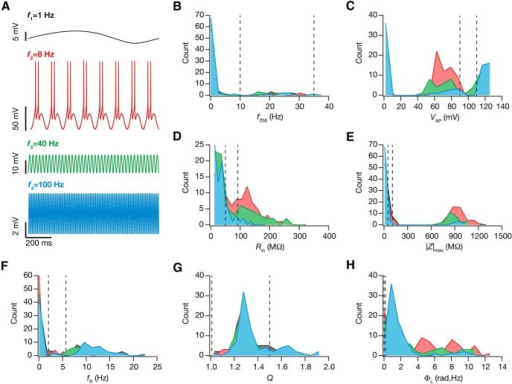 The frequency of afferent inputs critically regulated changes in intrinsic response properties during cell-autonomous self-regulation of calcium homeostasis. A, The steady state voltage response for 4 different sinusoidal frequencies (delta, 1 Hz, black; theta, 8 Hz, red; slow gamma, 40 Hz, green; fast gamma, 100 Hz, blue). B–H, Histograms of the steady state measurement values (f250, B; VAP, C; Rin, D; /Z/max, E; fR, F; Q, G; ΦL, H) for the 78 neurons for different sinusoidal frequencies appropriately color-coded. The dashed lines in B–H represent the lower and upper bounds for the corresponding measurement (in that order) in the GSA model validation procedure (Table 2).