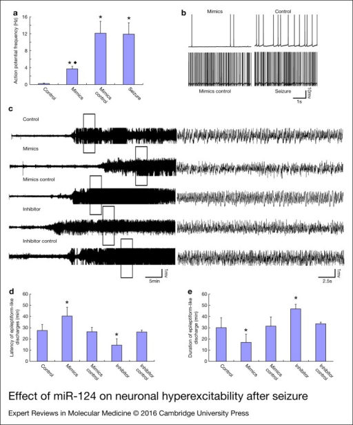Effect of miR-124 on neuronal hyperexcitability after seizure. (a) Changes of AP frequency. *P < 0.05, compared with control, n = 5 in each group; ◆ P < 0.05, compared with the mimics control, n = 5 in each group. (b) Representative traces of action potential (AP) discharges. (c) Typical trace of LFPs on rats treated with miR-124 mimics and inhibitor. (d) The miR-124 mimics significantly prolonged the latency of epileptiform-like discharges and the miR-124 inhibitor significantly shorted the latency of epileptiform-like discharges compared with the controls in a model of pilocarpine induced seizures, n = 5, ★ P < 0.05, compared with the control. (e) The duration of epileptiform-like discharges last shorter on rats treated with miR-124 mimics and longer on rat treated with miR-124 inhibitor in a model of pilocarpine-induced seizures, n = 5, ★ P < 0.05, compared with the control.