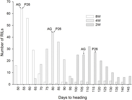 Greenhouse heading dates.Frequency distribution for heading dates of recombinant inbred lines from a cross between AGS 2000 (AG) and 26R61 (P26) after 8 weeks; 8W, 4 weeks; 4W, and 2 weeks; 2W, of vernalization treatment.