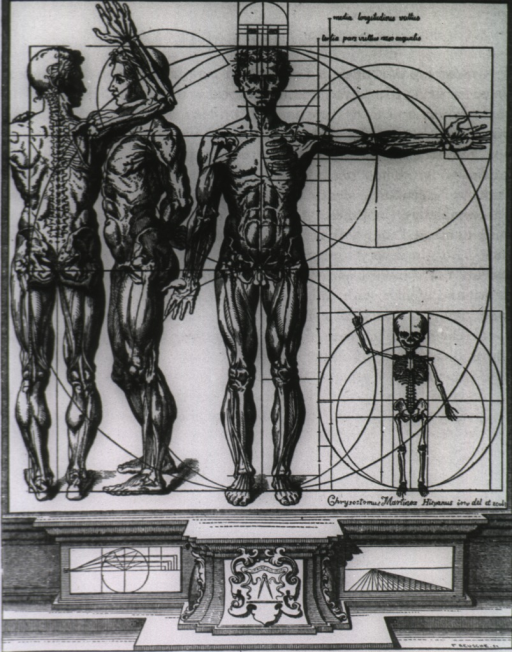<p>Three upright muscle-manikins, representing views from different sides, with bones sketched in and musculatures fully crosshatched; at right is an outline representation of a child's skeleton; figures are surrounded by proportional circles and lines.</p>
